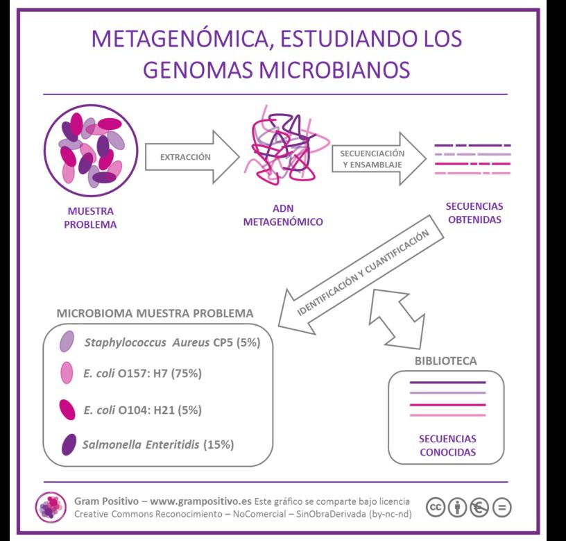 Infográfico Metagenómica Gram Positivo