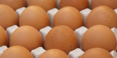 bandeja-huevos